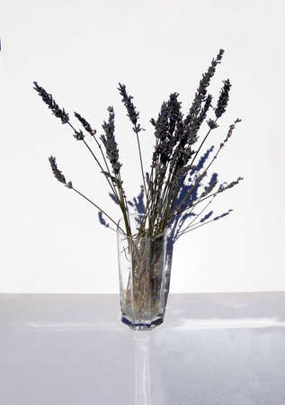 Dried lavender in a sunlit glass vase.