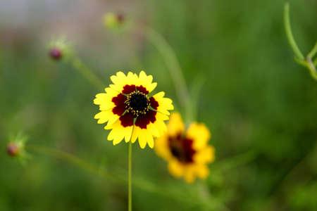 Flor amarilla y marrón Foto de archivo - 12164953