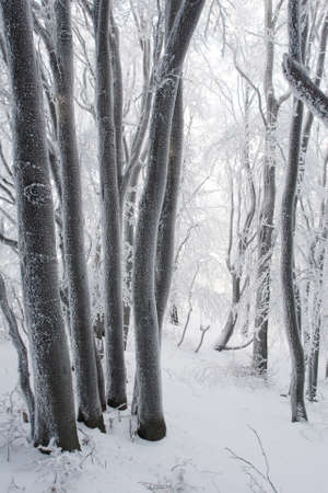Winter in a European forest
