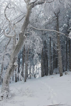 Cold winter in the forest photo