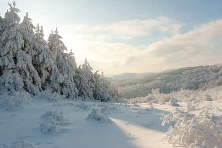 Winter mountain landscape with Christmas frosen pine-trees