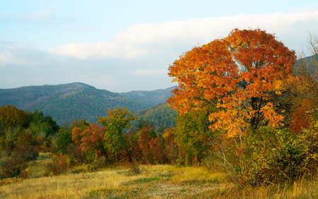 Scenario di montagna autunno con un albero giallo al tramonto Archivio Fotografico - 6945463