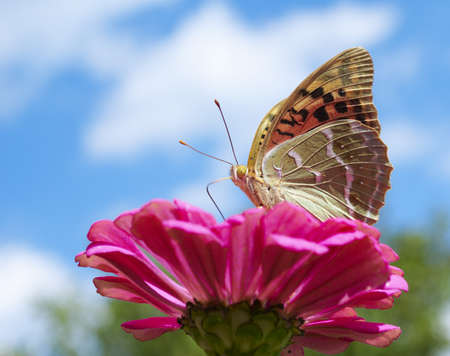 Butterfly on a red flower against blue sky Stock Photo