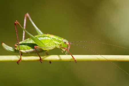 Grasshopper on a grass Stock Photo - 6941098