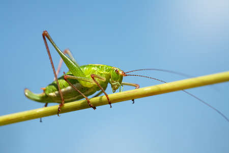 Grasshopper on a grass Stock Photo