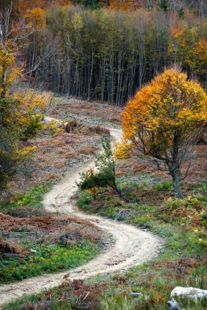 Trail in an autumn mountain forest Stock Photo - 6945451
