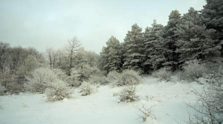 Frosen forest with snow at evening time Stock Photo - 6945455