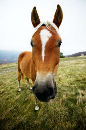 Funny horse portrait with wide angle lens