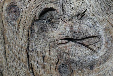 burl wood: Old wood close-up