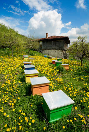 Old wooden house and colorful apiary with yellow flowers Stock Photo