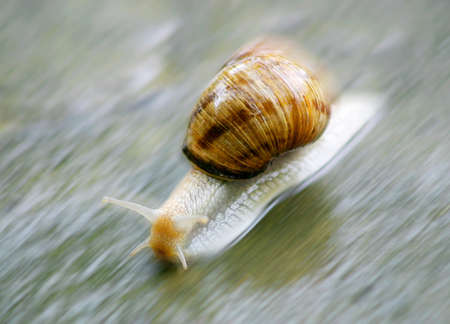 to hasten: Snail moving fast - concept