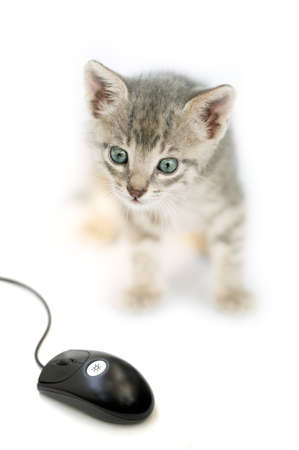 Curious little cat looking a computer mouse Stock Photo