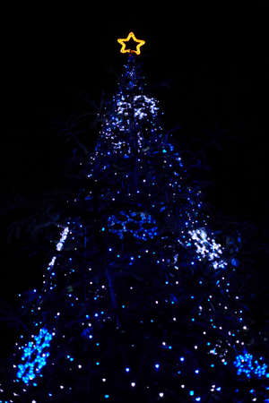 real christmas tree with blue lights and star at the top stock photo 8017211 - Christmas Tree With Blue Lights
