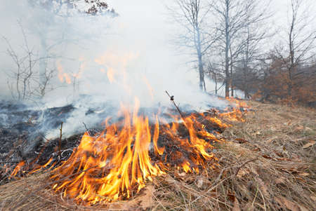 Disater in oak forest, fire in the woods Stock Photo - 18430697