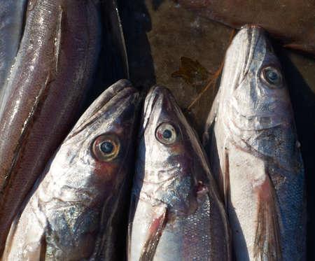 Fresh mediterranean cod-fish for sale on market of Marseille, France