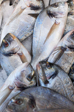 Fresh mediterranean sea-bream fish for sale on market of Marseille, France