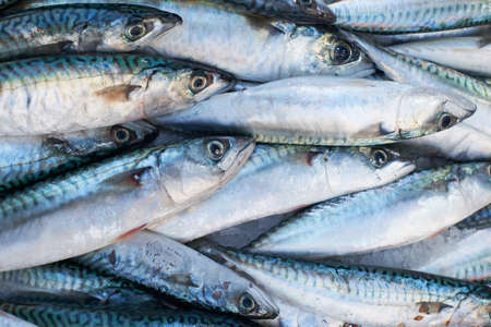Fresh mediterranean mackerel  fish for sale on market of Marseille, France Stock Photo