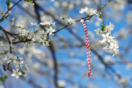 traditional custom: Bulgarian traditional custom spring sign Martenitsa on blosson tree branch against blue sky