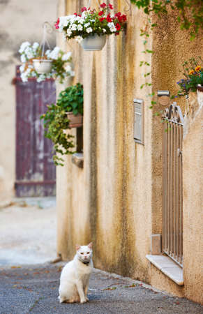 White domestic cat on typical street with ancient buildings in Grambois village, Provence, France Stock Photo