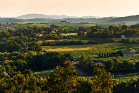 Typical French Provence rural landscape in summer at sunset