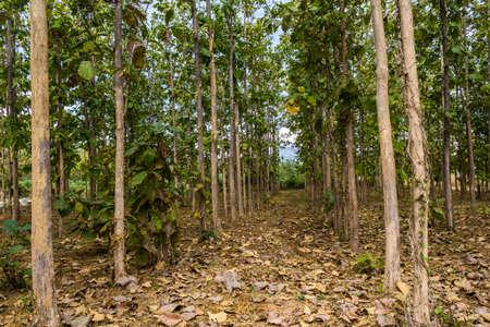 plantations: forestry plantations