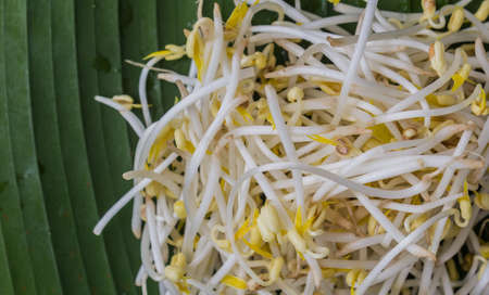 Close up of bean sprouts Stock Photo