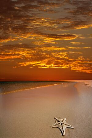 Scenic tropical beach with a dramatic red sky and starfish in the foreground Stock Photo - 4734317