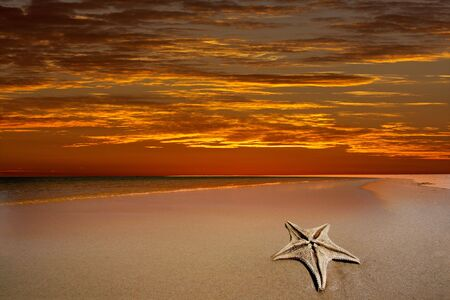 Scenic tropical beach with a dramatic red sky and starfish in the foreground Stock Photo