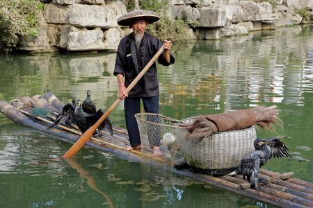 Yangshuo, Guangxi region, China, June 21, 2008 - Chinese man fishing with cormorant birds - a traditional fishing method in which fishermen use trained cormorants to fish  Editorial