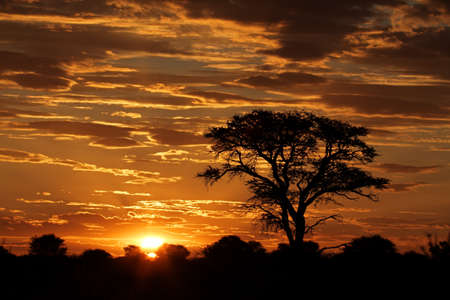 unspoiled: Sunset with silhouetted African Acacia tree and clouds, Kalahari desert, South Africa