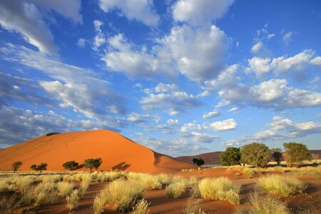 砂漠の草、大規模な砂丘と雲、ソーサス フライ、ナミビア、アフリカ南部の空と風景します。 写真素材