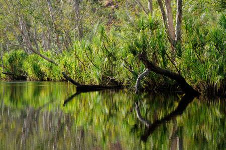edith: Trees with reflections, Leliyn - Edith falls, Nitmiluk National Park, Northern Territory, Australia Stock Photo