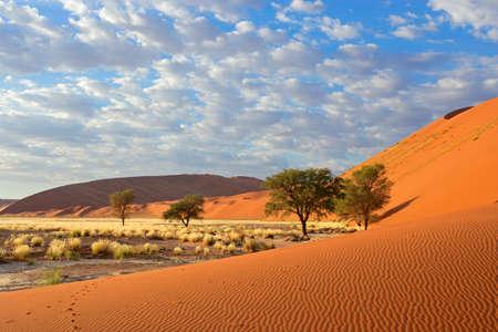 Sossusvlei paysage avec des arbres d'acacia et de dunes de sable rouge, la Namibie, l'Afrique australe Banque d'images