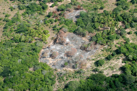subsistence: Slash-and-burn agricultural practice - cutting and burning of forests to create fields, Mozambique, southern Africa