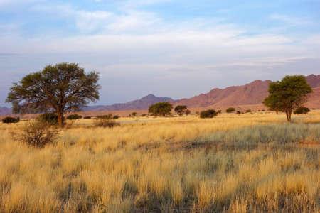 Paisaje desértico con pastos y árboles africanos Acacia en luz de la tarde, Namibia, África meridional