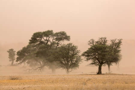 Severe sand storm in the Kalahari desert, South Africa photo