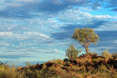 Afrikanische Landschaft mit einem Baum auf einem felsigen Grat gegen einen blauen Himmel mit Wolken