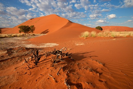Desert landscape with  grasses, red sand dunes and African Acacia trees, Sossusvlei, Namibia
