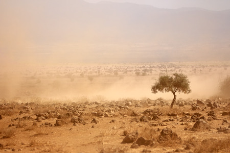 심각한 가뭄 동안 먼지가 많은 평야 케냐