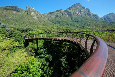 Elevated walkway in the Kirstenbosch botanical gardens, Cape Town, South Africa Archivio Fotografico