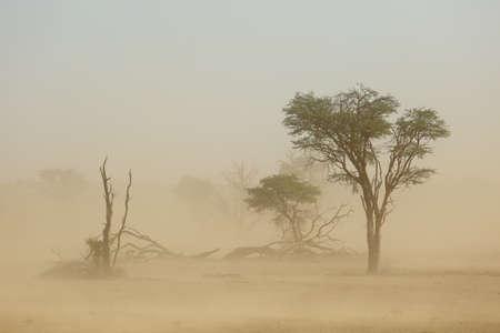 カラハリ砂漠、南アフリカの深刻な砂の嵐の中の木のある風景します。