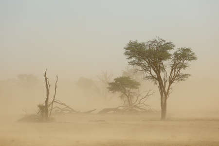 Landscape with trees during a severe sand storm in the Kalahari desert, South Africa Stock fotó - 72730028