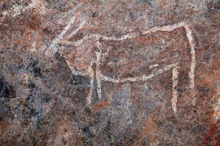 Bushmen (san) rock painting of eland antelopes, Northern Cape, South Africa
