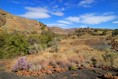 Scenic landscape with wildflowers, Mountain Zebra National Park, South Africa