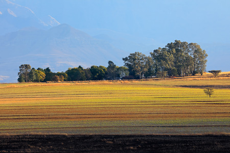 Rural landscape with cultivated fields, trees and distant mountains in mist, South Africa