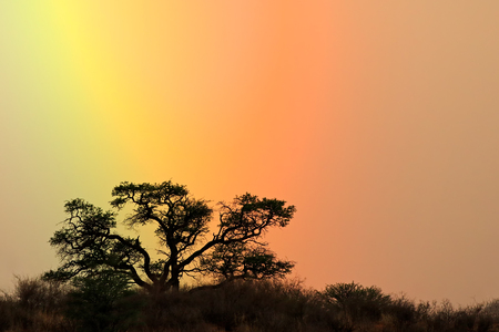 Landscape with a tree silhouetted against a colorful rainbow sky, Kalahari desert, South Africa