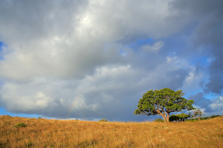 African savannah landscape with trees in grassland with a cloudy sky, South Africa