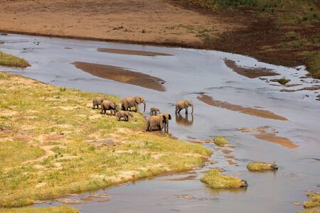 Small herd of African elephants crossing the olifants river, Kruger National Park, South Africa Stock Photo