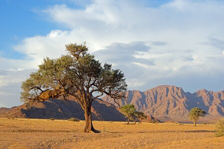 Namib desert landscape with rugged mountains and a thorn tree, Namibia