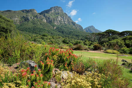 View of the Kirstenbosch botanical gardens against the backdrop of Table mountain, Cape Town, South Africa